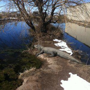 A Strange Sight in Colorado