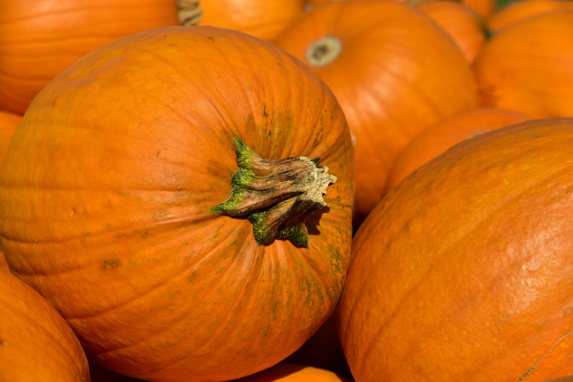 Alamosa Event Calendar For Halloween 2020 Halloween in Alamosa