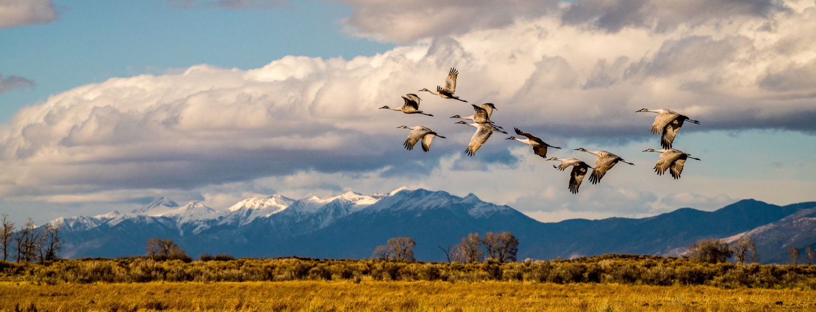Bird Watching and Wildlife Viewing